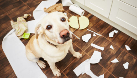 Disastri a 4 zampe: ecco perché il vostro cane combina guai quando rimane da solo