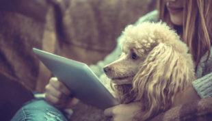 Hai un cane o un gatto? Ecco le 5 app da scaricare subito