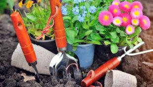 Coltivare fiori e carote: tutti i benefici dell'orto e del giardino