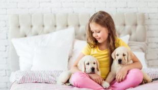 La casa a prova di cucciolo
