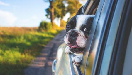 Viaggio in auto con il proprio animale domestico? Ecco alcuni consigli pratici